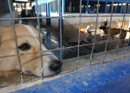 Prevenir la cruauté envers les animaux