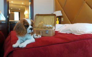hotel pour chien